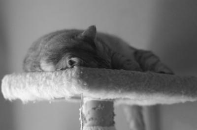 子猫さん 10.11.JPG