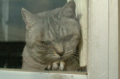 子猫さん 4.12.JPG