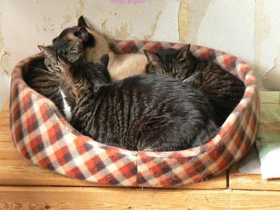 猫ベッド1 7.18.JPG