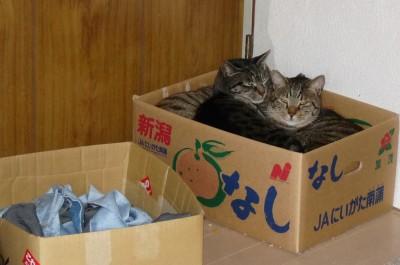 箱猫 12.27.JPG