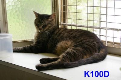 K100D 7.28.JPG