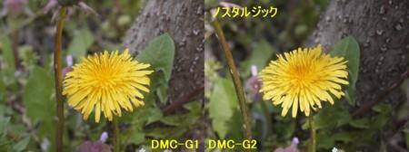 たんぽぽ2 4.9.jpg