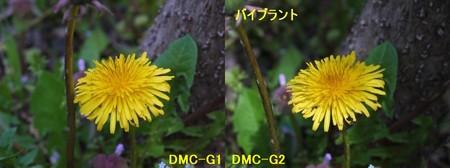 たんぽぽ3 4.9.jpg